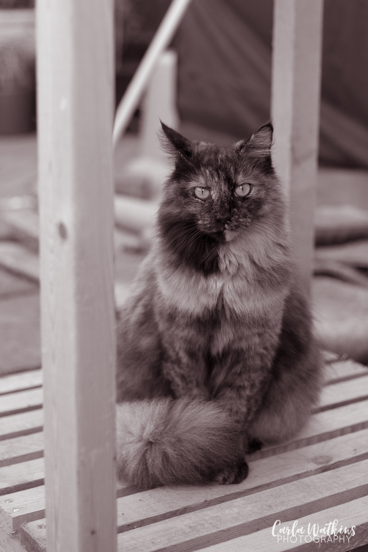 Kitten Builder | Carla Watkins Photography | carlawatkinsphotography.com