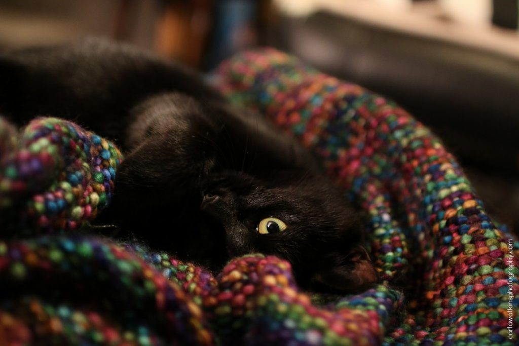 Luna kitten on a multicoloured blanket | carlawatkinsphotography.com