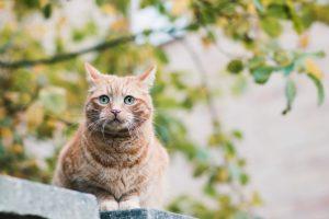 Pat the cat   carlawatkinsphotography.com