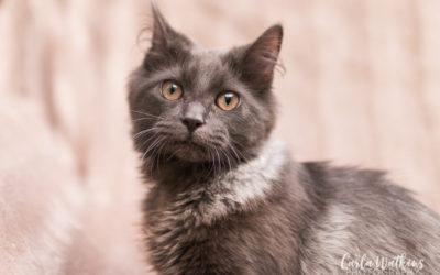 Pet Portraits: Captain Floof and Princess