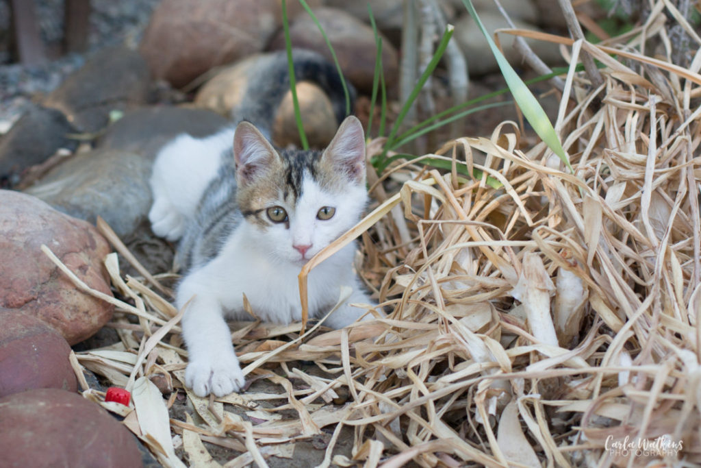 Kitten at the Mojito beach bar, Rhodes | Carla Watkins Photography | carlawatkinsphotography.com