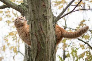 cat in a tree   carlawatkinsphotography.com